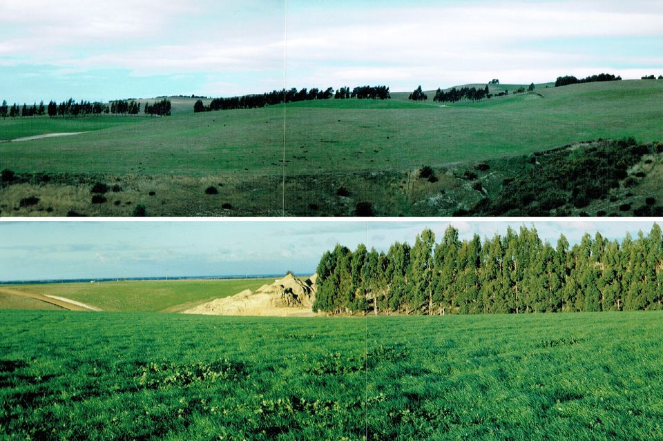 Irrigation - Before and after - 2001