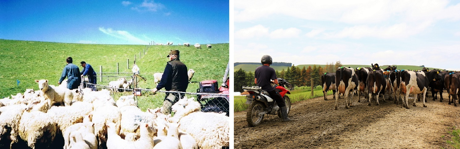 Sheep farm 2003 - Dairy farm 2016